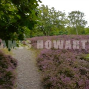 ENGLAND – CIRCA 2011: Point of view walking through forest flora. - Actor Stock Footage