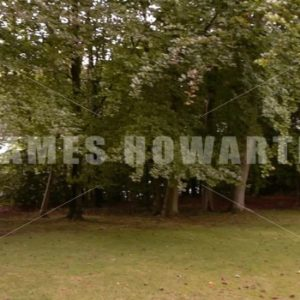 ENGLAND – CIRCA 2011: Tilt up and pan left and right of forest and lake. - Actor Stock Footage