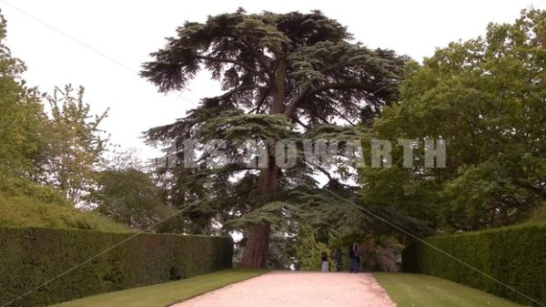 ENGLAND – CIRCA 2011: Tree at Howard Castle gardens. - Actor Stock Footage