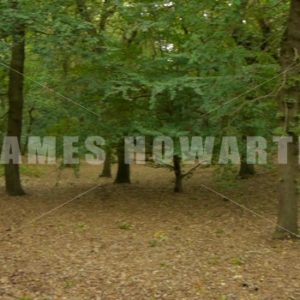 ENGLAND – CIRCA 2011: pan across the forest to man. - Actor Stock Footage