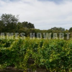 ENGLAND – CIRCA 2011: Pan across english vineyard wines vines - Actor Stock Footage