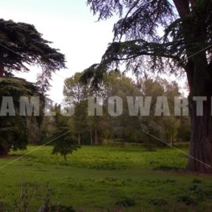 Old english trees in a forest clearing. - Actor Stock Footage