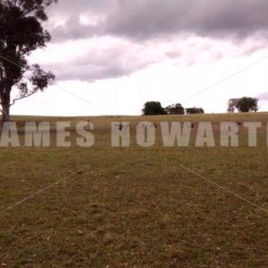 Kangaroo herd on grass area. - Actor Stock Footage