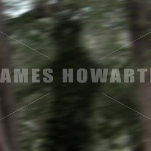 Shadow of man running in the forest. - Actor Stock Footage